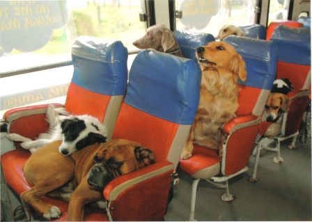 Dogs on a bus. I have no explanation for this.